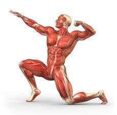 Muskel og sykdom